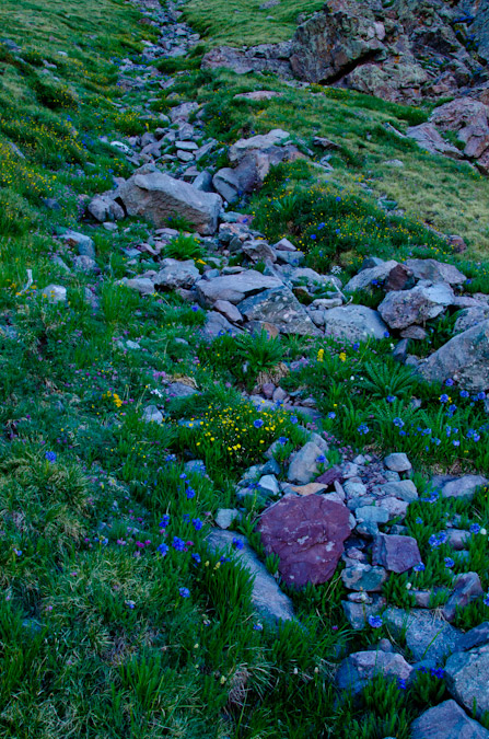 Mount Adams trail of flowers