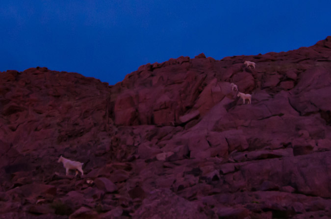 Mountain Goats descending Eolus