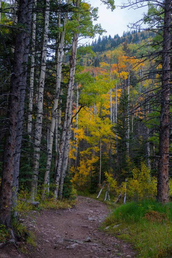 Fall colors at the South Colony Basin Trail