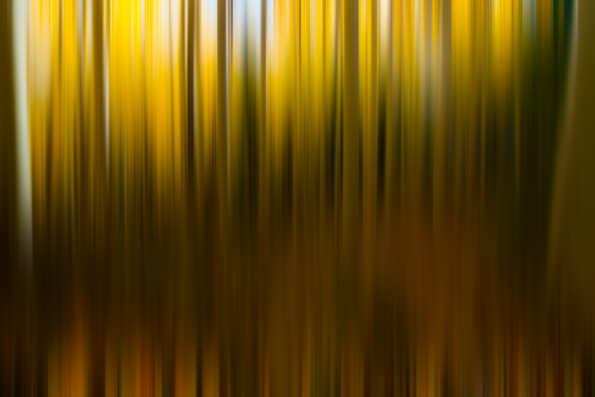 Fall Color Aspen Abstract