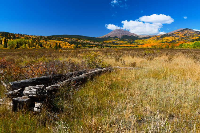 Buffalo Peaks fall colors and old cabin