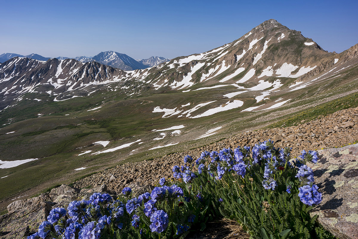 Casco Peak and sky pilot flowers