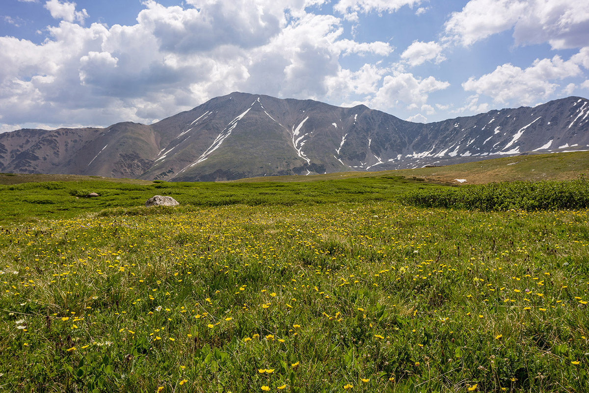 Mount Elbert and Wildflowers