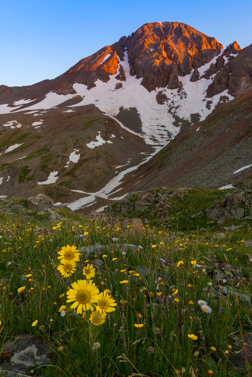 Wilson Peak and Alpine Sunflowers at sunrise