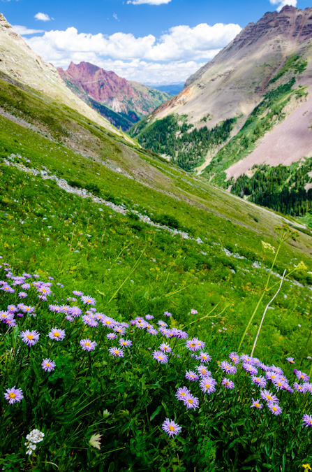 Wildflowers in the Maroon Bells basin