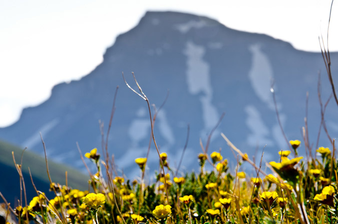 Uncompahgre and Wildflowers