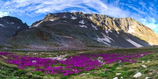 A Panoramic of Wildflowers beneath Mt. Wilson
